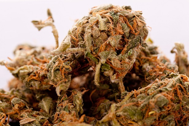 Close up Dried Cannabis or Marijuana Leaves Used for Psychoactive Drug or Medicine on Top of the Table