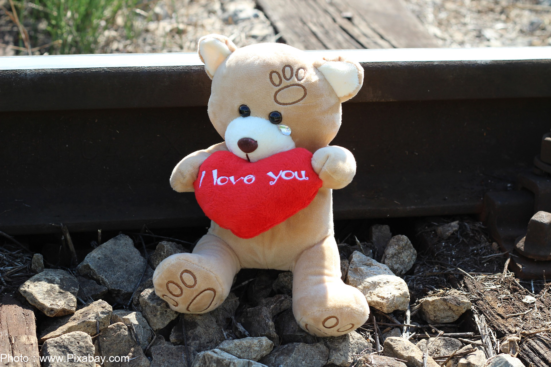 Teddy bear holding a heart sign that says I love you