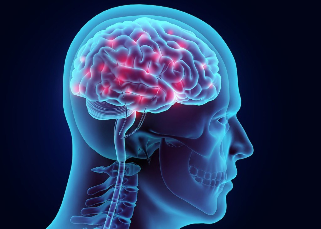 Transparent human brain with glowing neurons