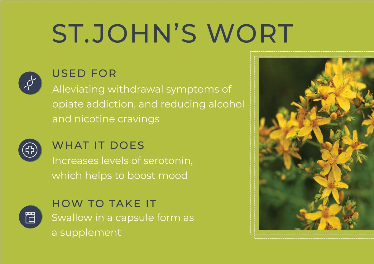 8 Herbs to Curb Your Cravings - ST.John's Wort
