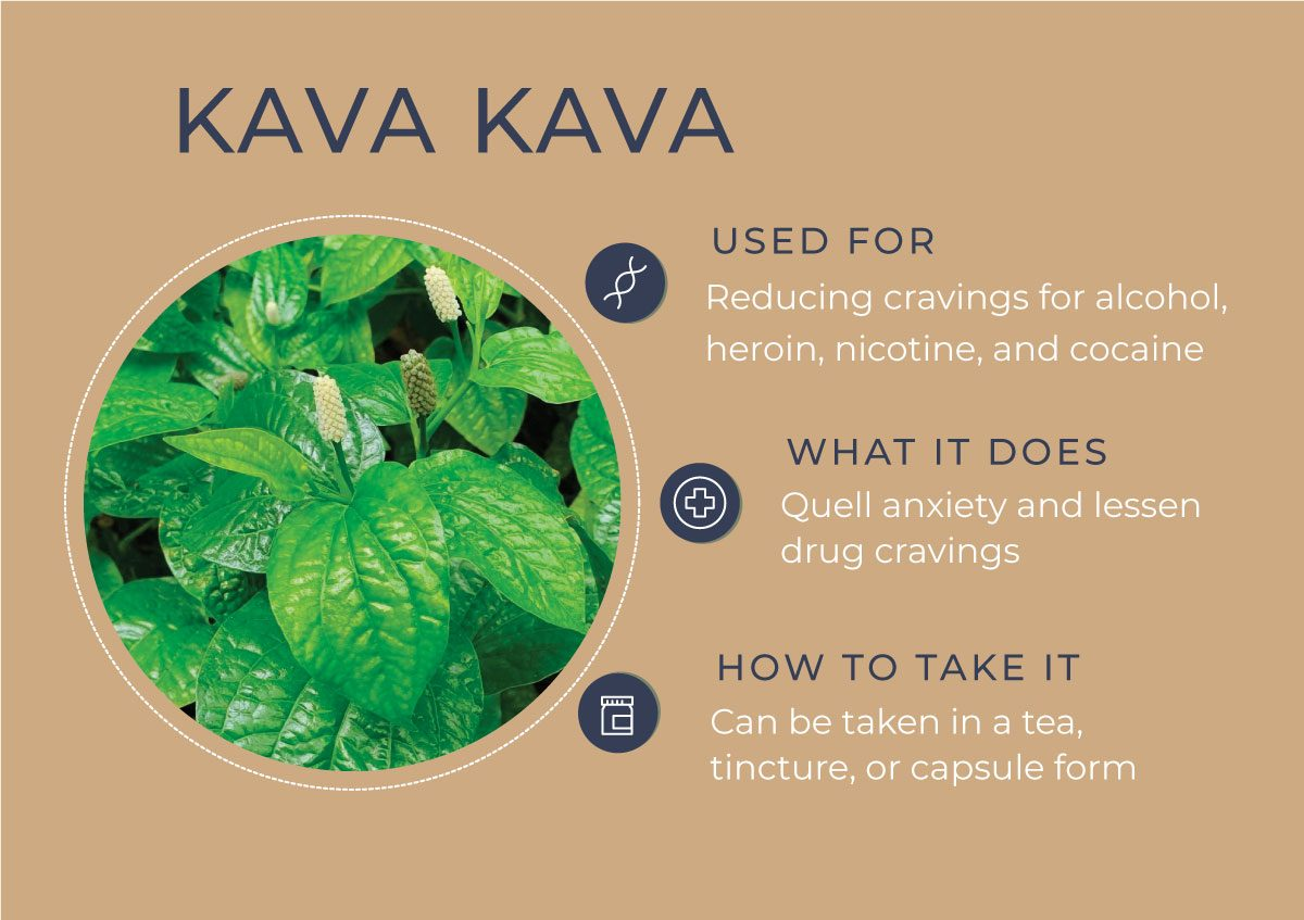8 Herbs to Curb Your Cravings - Kava Kava
