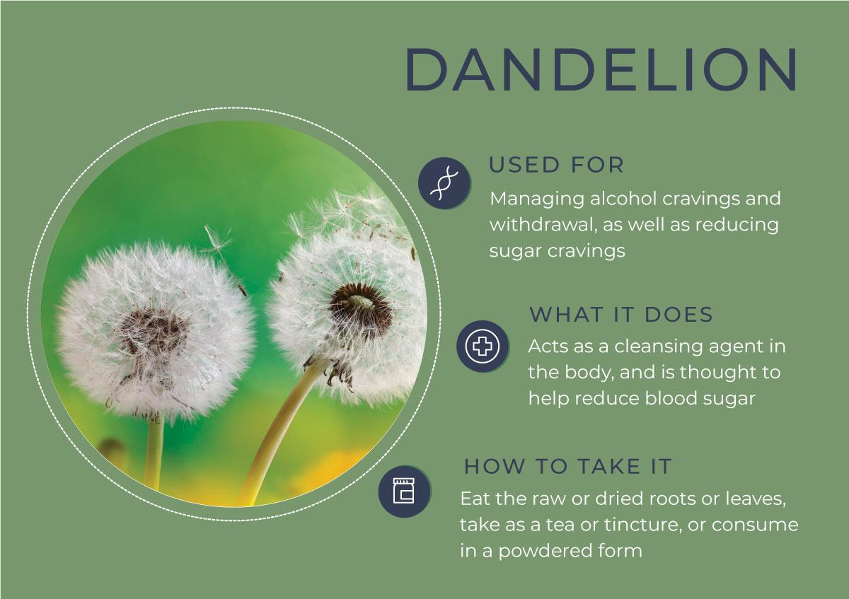 8 Herbs to Curb Your Cravings - Dandelion