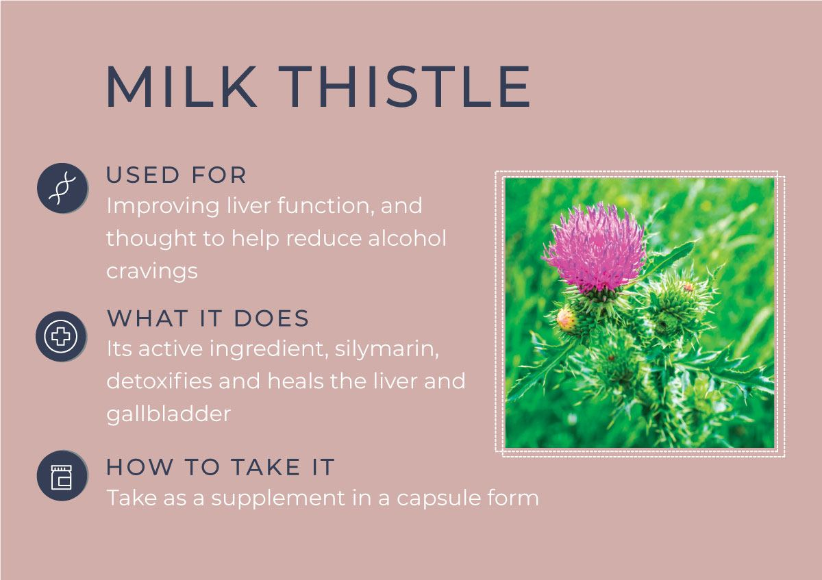 8 Herbs to Curb Your Cravings - Milk Thistle