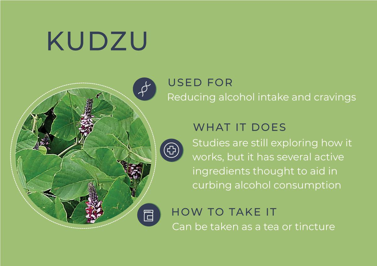 8 Herbs to Curb Your Cravings - Kudzu